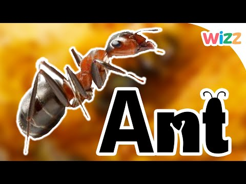 Ants For Kids