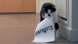 Fortune Kitty PREDICTED the Super Bowl Winner!