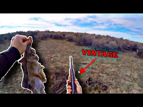 (Hunt Clean Cook) Rabbit Hunting Using Vintage 410 Shotgun (*Graphic*)