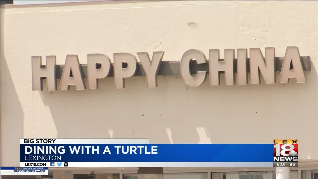 Lfchd Inspector Finds Pet Turtle Hanging Out In Sink Of