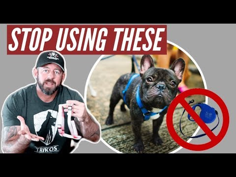 Stop Using Retractable Leashes And Harnesses On Your Dog!