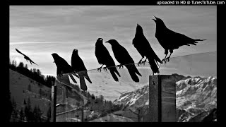 """Like a Bird"" 90s OLD SCHOOL BOOM BAP BEAT HIP HOP INSTRUMENTAL"