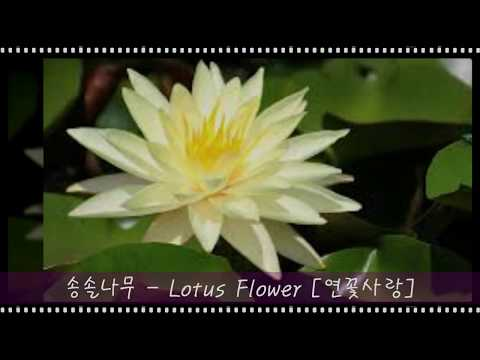 lotus flower mp3 download free lotus flower 3 mightylinksfo