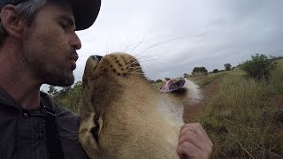 Why The Lions DON'T Run Away! #AskMeg | The Lion Whisperer