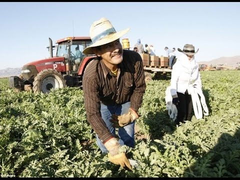 How Much Do Undocumented Immigrants Contribute To The US Economy?