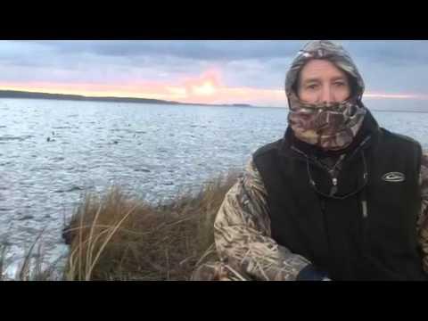 Rose bay hunt