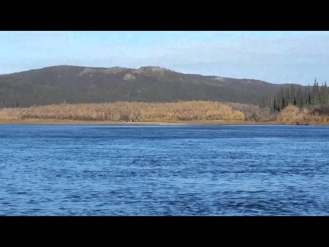 Moose & Caribou 2