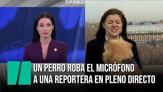 Un perro roba el micrófono a una reportera en pleno directo