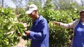 Introducing the Zandberg Citrus Estate