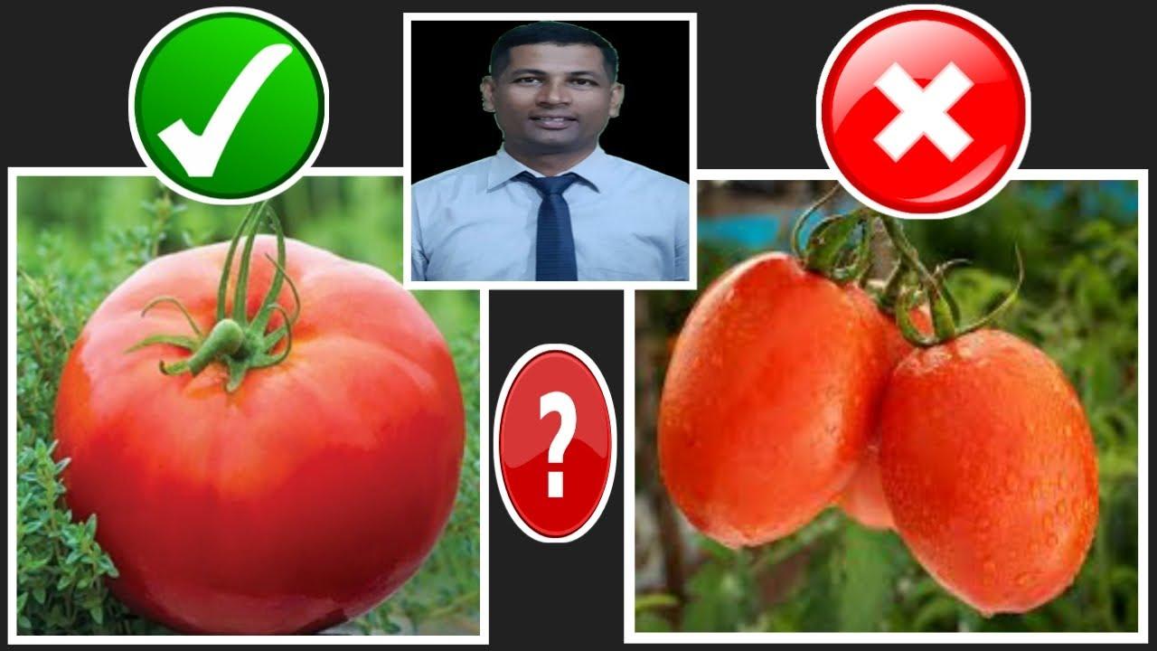 କେଉଁ ଟମାଟୋ ଖାଇବେ ? | Benefit of Tomato | Health Benefit of Tomato | Ayurvedic Benefit of Tomato |