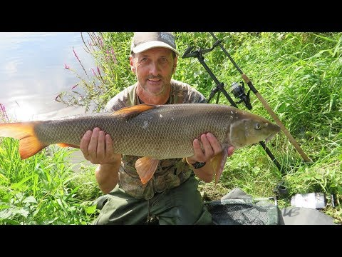 BARBEL FISHING ON THE RIVER TRENT FISKERTON  - VIDEO 58