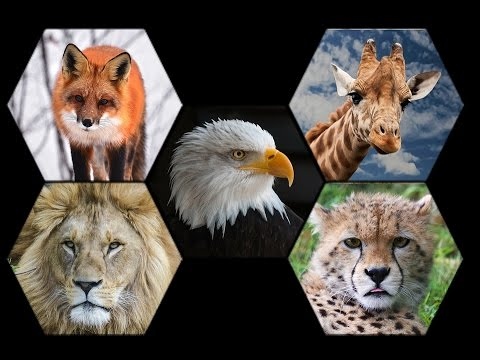 What Are Pet Animals, Domestic Animals And Wild Animals ...