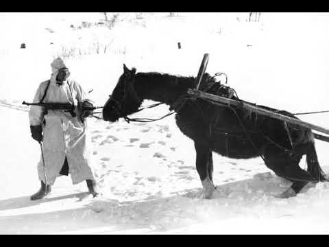 Horses In World War II   Wikipedia Audio Article