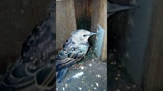 Yabani kuş buldum cinsini bilmiyorum dişarı bıraktım geri bilenler cinsini yoruma yazsın