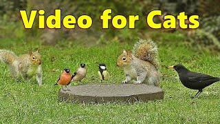 Videos for Cats  Squirrels and Birds Mania ⭐ 10 HOURS ⭐