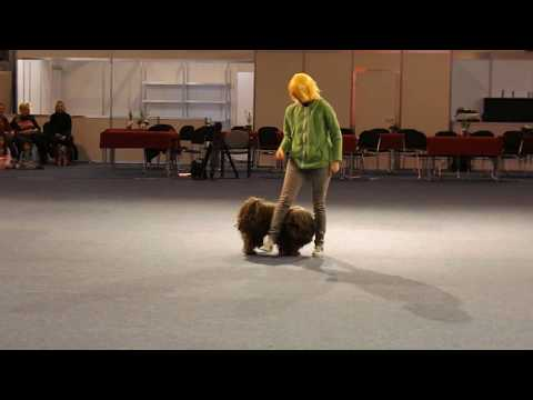 "Winter Dog Dancing Show 2019 Rasztari-Duci Istennyila ""TÁLTOS"" Freestyle1"
