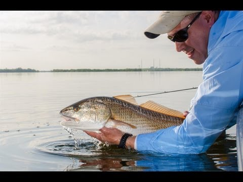 Redfish Cover, 2012 Florida Saltwater Recreational Fishing Regulations, Mosquito Lagoon, FL