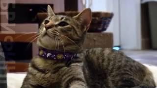 Ваш кот действительно любит вас больше, чем еду