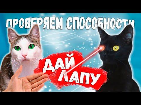 Коты охотятся на мышку. Проверяем способности кота Мишки. Приколы с животными / SANI vlog
