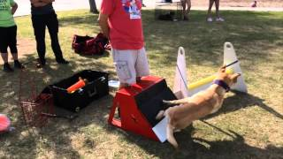 Crazy Train Flyball