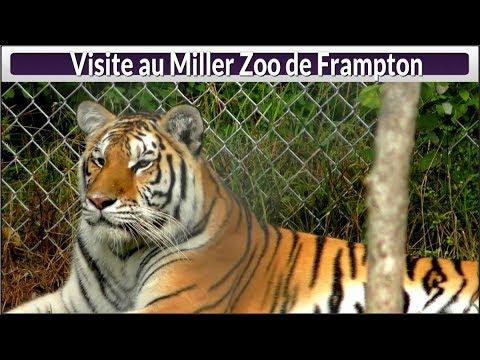 Visite au Miller Zoo de Frampton (Hier@Aujourd`hui)
