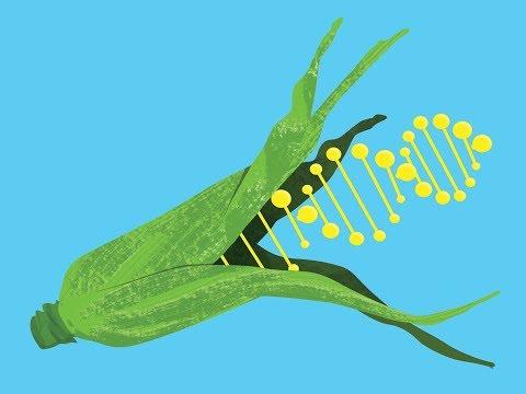 Genetically Modify Food