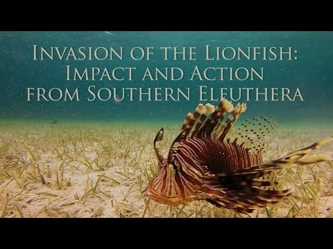 Invasion Of The Lionfish: Impact And Action From Southern Eleuthera
