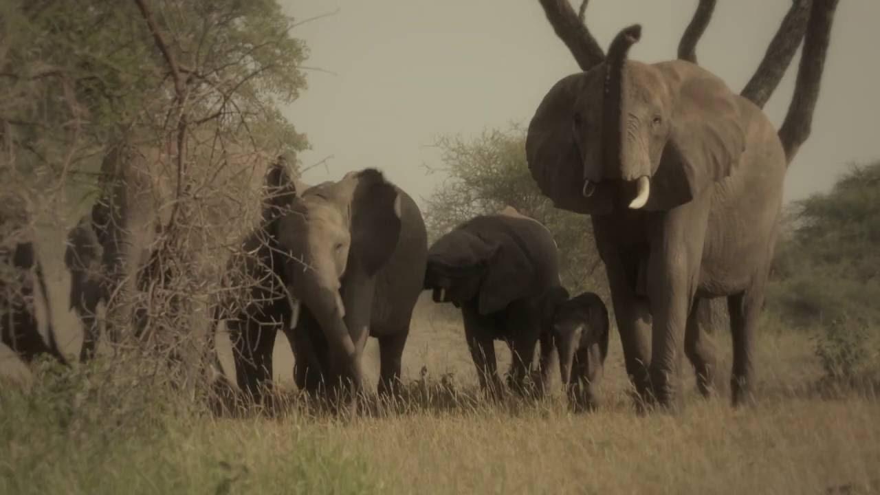 野生救援--周杰倫公益廣告(大象篇) - YouTube