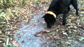 1月の末散歩していたら、寒い中、道に蛇がいました。そのときの様子です。
