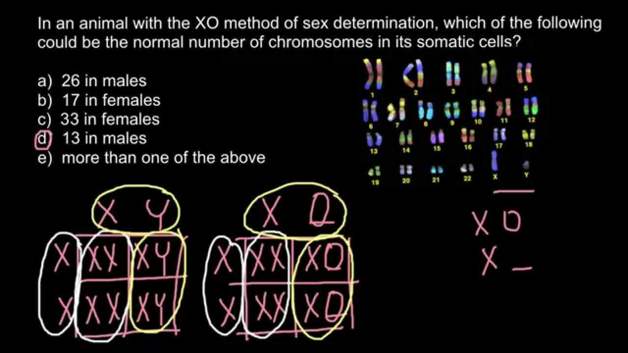 x0 sex determination systems in Kelowna