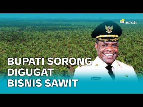 Cabut Izin Perusahaan Sawit, Bupati Sorong Digugat | Narasi Newsroom