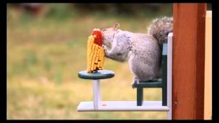 Duncraft Eco-squirrel Table And Chair Feeder 4226.flv