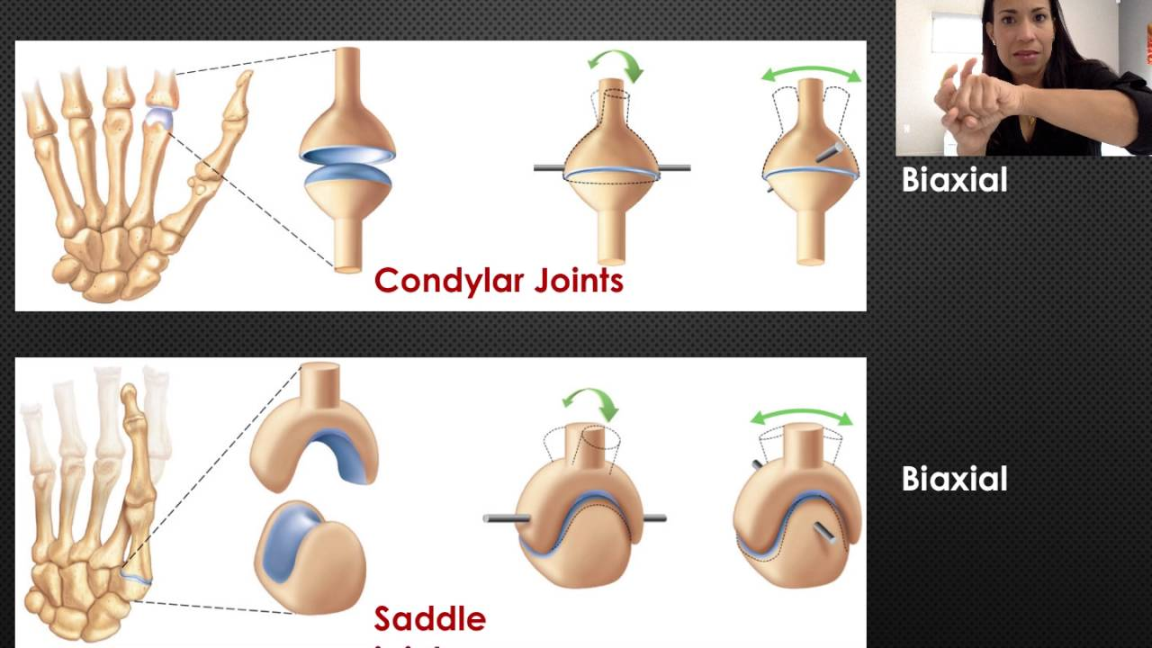 6 Types Of Synovial Joints Youtube