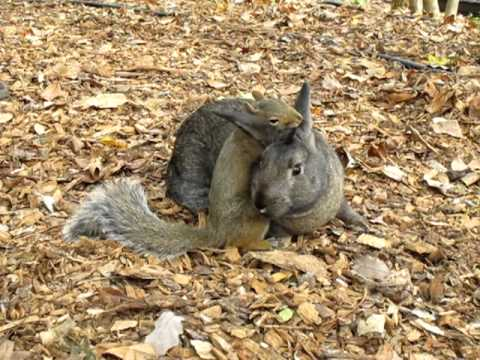 how to keep rabbits and squirrels out of your garden