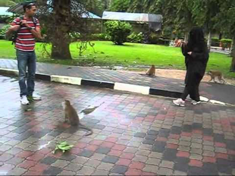 monkeys in Pinang.wmv Travel Video