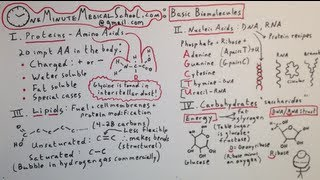 Four Basic Biomolecules: Building Blocks Of All Life - One Minute Medical School