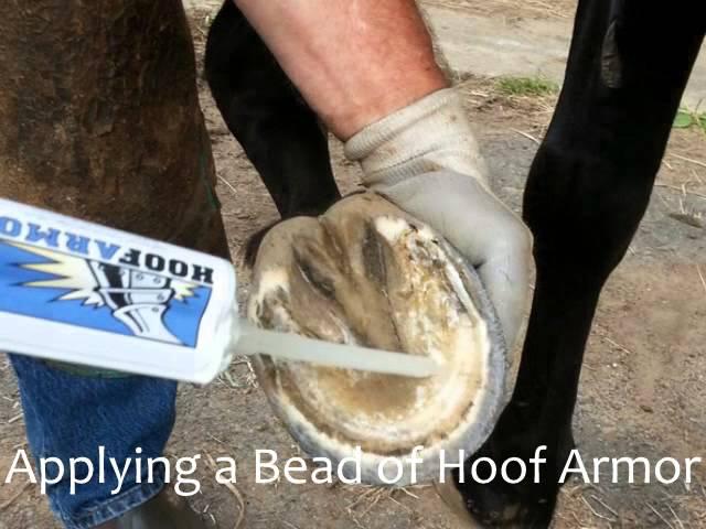 Hoof Armor Website.wmv