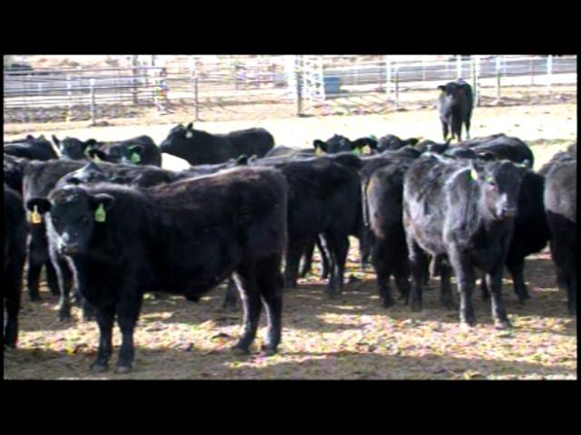 Spur Ranch Vinita, Oklahoma
