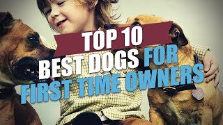 Top 10 Best Dogs for First Time Owners