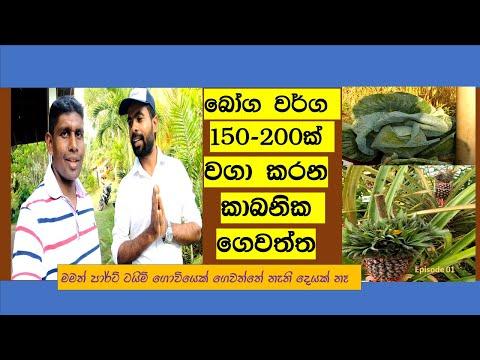 බෝග 150කට වැඩි කාබනික ගෙවතු වගාව -  Home Garden Organic Farming- Episode 01 -part time Farmer