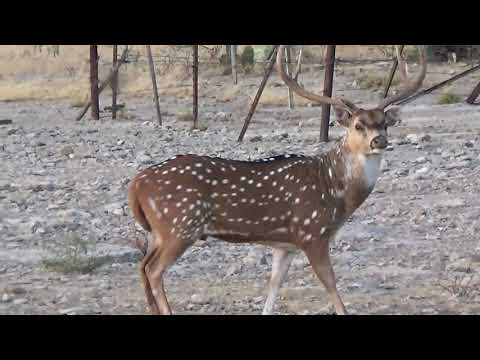 Hunting Exotic Animals In SouthWest Texas