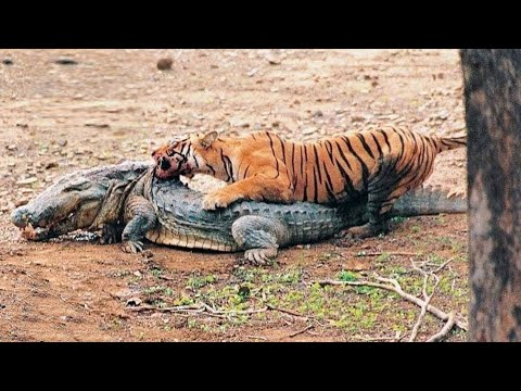 5 Animals that Could Defeat a Crocodile