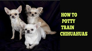 How To Potty Train Chihuahuas