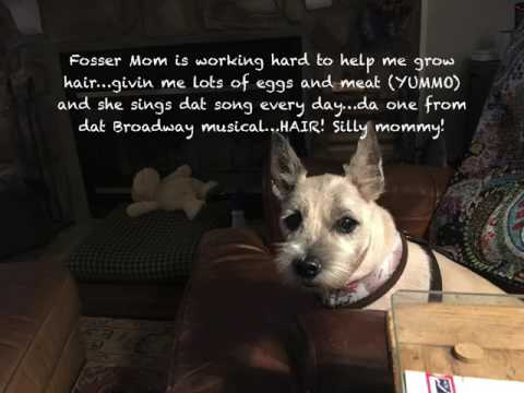 Cairn terrier looking for a home....