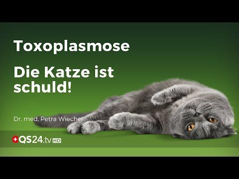 Toxoplasmose wird von Hauskatze auf Menschen übertragen