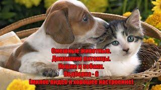 Смешные животные Домашние питомцы Кошки и собаки Подборка 6 милое видео и хорошее настроение