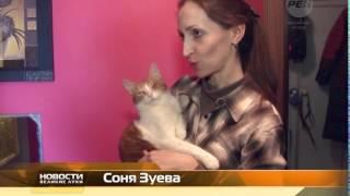 Дом для котов инвалидов