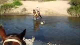 pal rio kompa