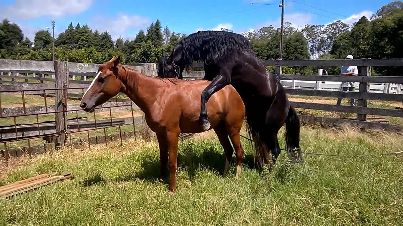 или фото спарка коней плодов