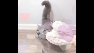 고양이와 탱글엔젤 Purring & Tangle…